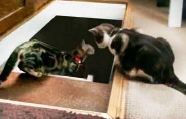 Les chats aussi savent faire des blagues.