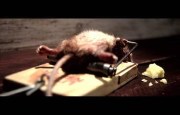 Une souris balèze
